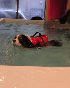 Swimmingchoco